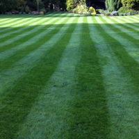Lawn Mower Question Series (1 of 6): What's The Best Type of Lawn Mower For My Lawn?