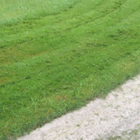 Lawn Mower Question Series (4 of 6): Should I Mulch Or Not? What's The Benefits and Drawbacks?