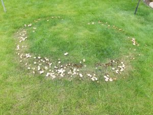 Fairy-Ring-Lawn-Master