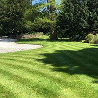 maintaining a lawn in summer heat