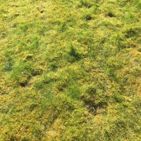 Untreated moss 1