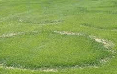 Fairy-Rings-Lawn-Master