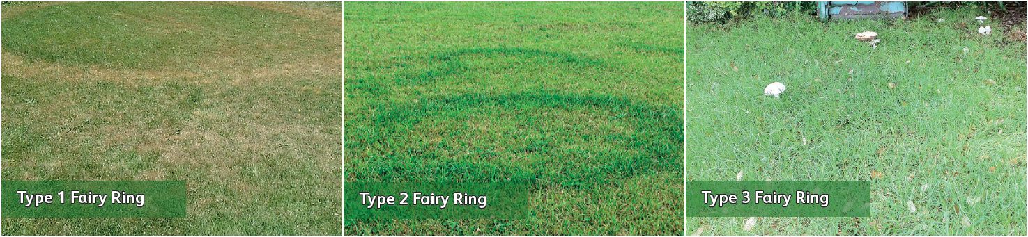 Lawn-Master-Fairy-Rings