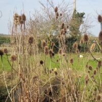 teasels-lawn-master