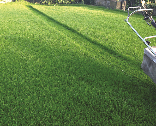 Mowing -Your-Lawn-Advice