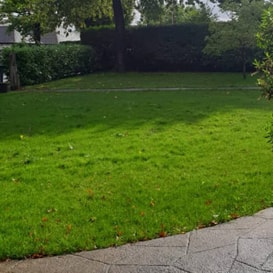 Lawn care in Sutton
