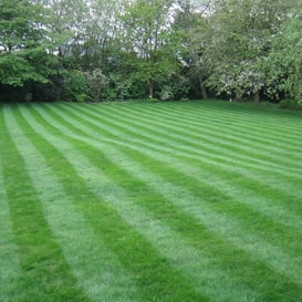 Lawn care in Purley