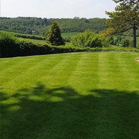 Lawn care in Kenley