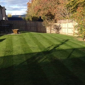 Example 1 of lawn care completed by Andy Wilson