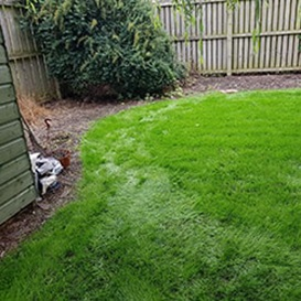 Lawn care in Newtonhill