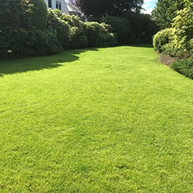 Example 2 of lawn care completed by Barry Dolan