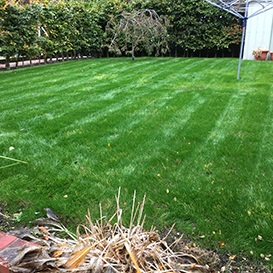 Example 4 of lawn care completed by Barry Dolan