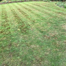 Example 7 of lawn care completed by Ben Lambert