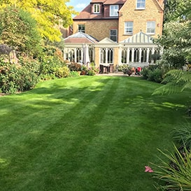 Lawn care in South Norfolk