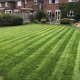 Lawn care in Attleborough
