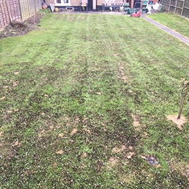 Lawn care in Great Yarmouth