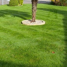 Example 2 of lawn care completed by Malcolm Garlick