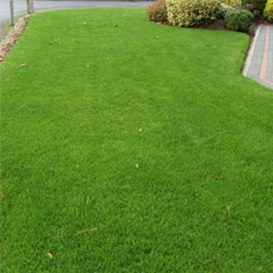 Example 6 of lawn care completed by Malcolm Garlick
