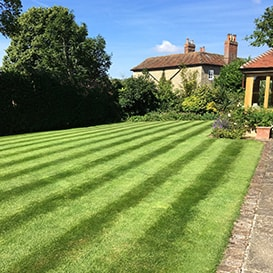 Lawn care in Aylesbury