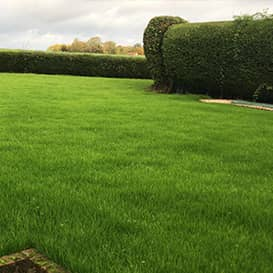 Example 6 of lawn care completed by Paul Chilvers