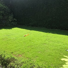 Lawn care in Stroud