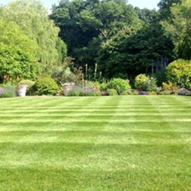 Example 3 of lawn care completed by Simon Marsh