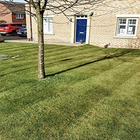 Lawn care in Auchterarder